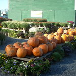 Schoharie Valley Farms/The Carrot Barn