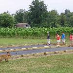 Enjoy a game of bocce & wine!