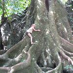Wonderful tree to climb