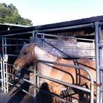 Garrod Farms Riding Stables Foto
