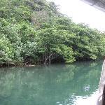 川べりのマングローブが美しい