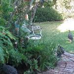 Purple Heron Guest House Foto