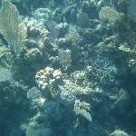 Fan coral.