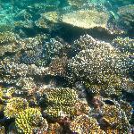 snorkeling house reef