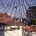 View from second floor window through fly screen