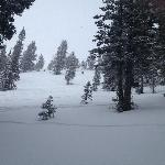 A fresh powder day in glade in Black Forest (in Honeycomb Canyon)