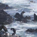 Seals super close by