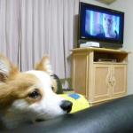 部屋で「24」のファイナルシーズンのDVDを見た