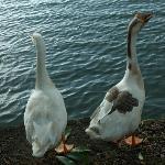 Lake haven,s pet