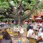 The Oaks Hotel Bar & Grill Foto