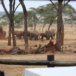 Elephants of Swala
