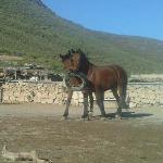 Happy relaxed horses