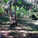 Coatis pay a visit...