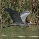 Leonabelle Turnbull Birding Center Foto