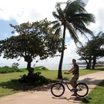 ‪Coconut Coasters Beach Bike Rentals‬