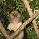 """""""Daniel"""" one of the male monkeys"""
