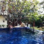 piscine de villa