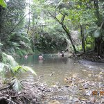 Daintree Tours