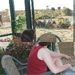 Guest viewing kangaroos