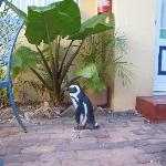 Penguin outside room