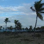 Field of palm trees on the trek to Windward Beach, Nevis, West Indies