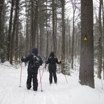Foto de Windblown Cross Country Skiing and Snowshoeing