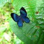 Colouful Butterflys are very common