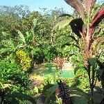 du bungalow vue sur la piscine