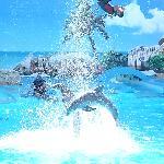 Dolphin show at zoo marine