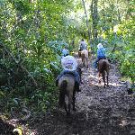 Horseback riding thru the jungle
