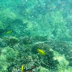 Colorful Corals & Reef Fish