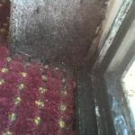 Mold on carpet