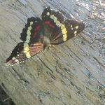 Butterfly at Curu