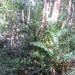 Curu Habitat