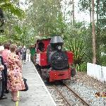 The steam train.