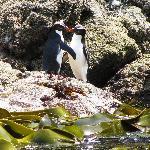 Enjoy a world class pelagic bird tour