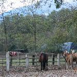 Nearby horseback riding facility