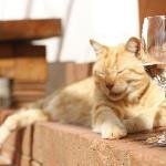The Famous Diemersdal Fat Cat, Ginger