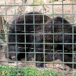 Tier- und Pflanzenpark Fasanerie Foto