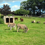 Small Breeds Farm Park and Owl Centre