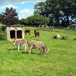 Small Breeds Farm Park and Owl Centre