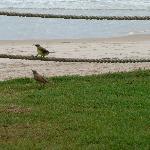 Dependendo do horário, você pode ter a companhia de pássaros no jardim.