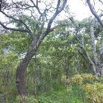 Indiginous trees