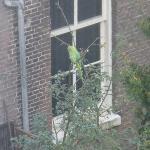 Resident parrot