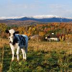 Lil Friend on the Farm