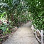 Grounds path