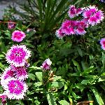 Lovely garden in Hotel premeses