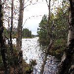 Further round  Loch An Eilein walk