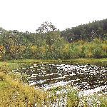 Further round circular Loch Morlich walk
