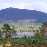 Cairngorms National Park Picture